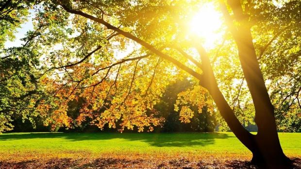 sunlight-through-trees-wallpaper-wallpaper-1